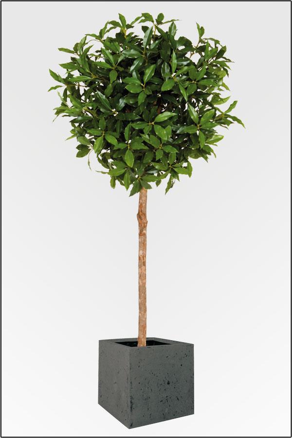 wir bieten ihnen eine gro e auswahl an k nstlichen pflanzen in unserem onlineshop zu. Black Bedroom Furniture Sets. Home Design Ideas