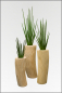 Mobile Preview: Sansevieria Cylindrica ca. 120 cm