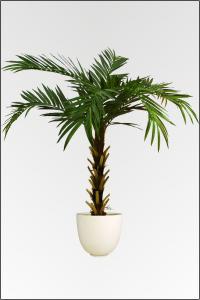 palmen ber 250 cm g nstig kaufen bei. Black Bedroom Furniture Sets. Home Design Ideas