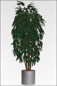 palmen ber 180 bis 250 cm g nstig kaufen bei. Black Bedroom Furniture Sets. Home Design Ideas