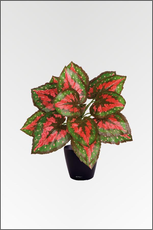 Wir bieten ihnen eine gro e auswahl an k nstlichen pflanzen in unserem onlineshop zu g nstigen - Begonie zimmerpflanze ...