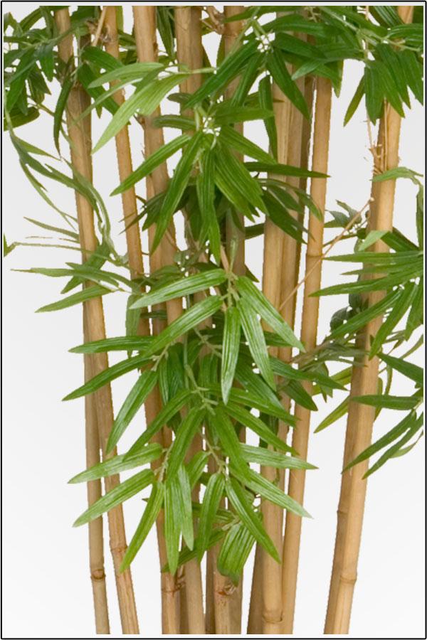 wir bieten ihnen eine gro e auswahl an k nstliche bambus. Black Bedroom Furniture Sets. Home Design Ideas
